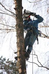 Спилить,  Удалить дерево
