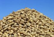 Картофель оптом. Самые низкие цены. 6 сортов