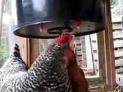 Поилки для птицы купить. Ниппельные поилки перепела/индюшата/курицы