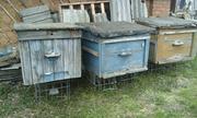 Пчелиные домики с сушью